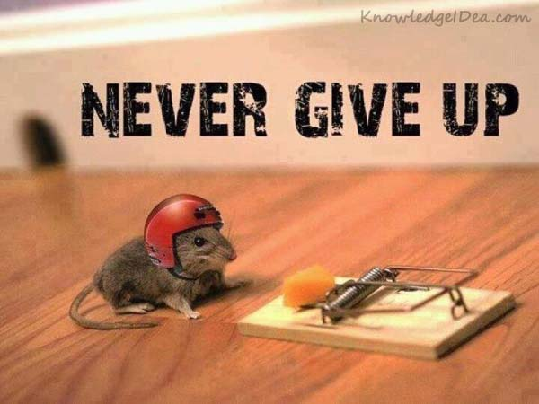 Reasons why we never Give up Website Seo